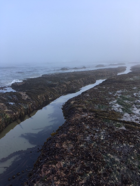 Long narrow tide pool
